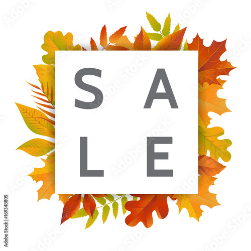 frame of colored autumn leaves white square on background of fall