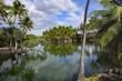 A group of palms lying on the banks of the pond - Big Island of Hawaii -
