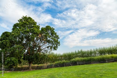 Obraz na plátne Pastoral Landscape: Tree Along the Fence Line