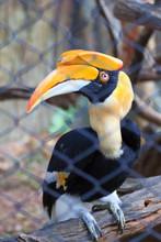 A Beautiful Hornbill Bird.
