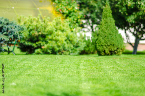 Obraz na plátně  ideal green lawn back yard anl almond