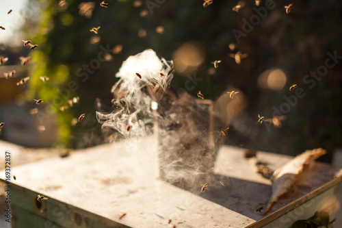Photo Bee smoker smoking in apiary copyspace seasonal honey bees beekeeping farming organic production producing concept
