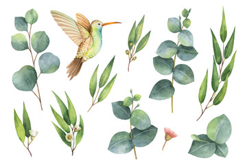 Obraz na SzkleWatercolor vector hand painted set with eucalyptus leaves and Hummingbird.