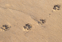 Photo Of Dog Footprint On The ...