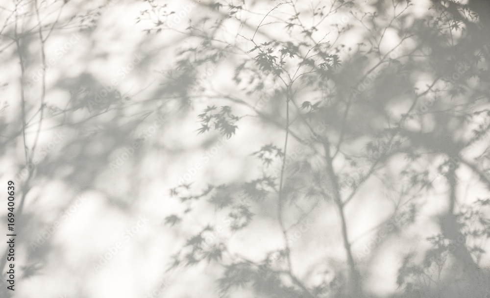 Fototapeta Tree leaves shadow on wall Nature Abstract background
