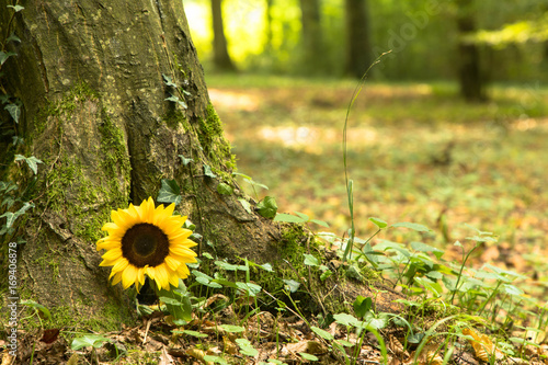 Waldfriedhof mit Sonnenblume Fototapete