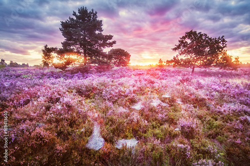 Tuinposter Lichtroze Lüneburg Heath, Sunrise, Germany
