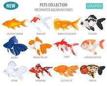 Freshwater Aquarium Fishes Breeds Icon Set Flat Style Isolated On White. Goldfish. Create Own Infographic About Pets
