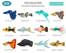 Freshwater Fishes Breeds Icon Set Flat Style Isolated On White. Live-bearing Aquarium Fish. Create Own Infographic About Pets