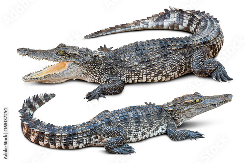 Fotobehang Krokodil Crocodile isolated