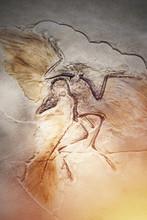 Died Bird In Stone Fossil.