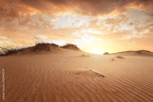 Foto auf AluDibond Wuste Sandig sunset in the desert / sand dune bright sunset colorful sky