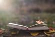 Leinwanddruck Bild - Book of poetry outdoors