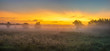 Gorgeous summer colorful and foggy morning in the meadow, trees and grass fogged in the mist,panorama