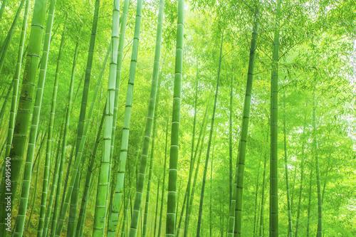 Fototapeten Wald bamboo forest
