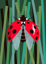 Ladybug Spreads Its Wings