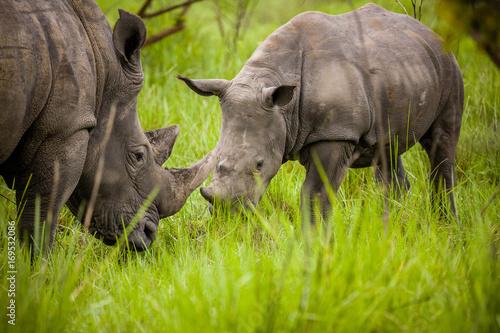 Spoed Foto op Canvas Neushoorn Rhino - Ziwa Rhino Sanctuary - Uganda