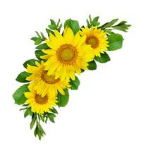 Yellow Sunflowers Wave Composi...