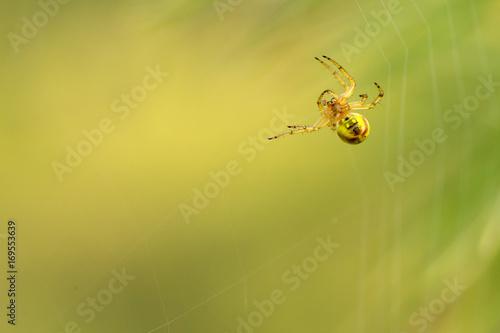 Fototapeta siberia nature buryatia irkutsk  obraz na płótnie