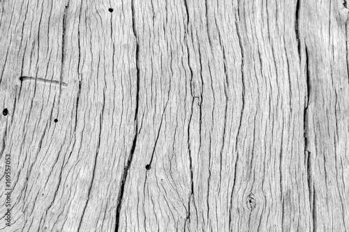 fond texture bois sec vieux tronc d 39 arbre en noir et. Black Bedroom Furniture Sets. Home Design Ideas