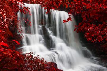 Fototapeta Drzewa Man Daeng waterfall.