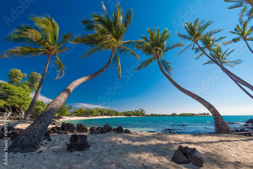 Foto auf Gartenposter Palms Group of Coconut Palm Trees at a Sandy Beach, Big Island, Hawaii