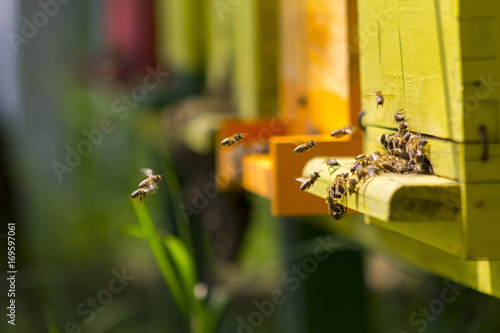 Photo Bees in beehive