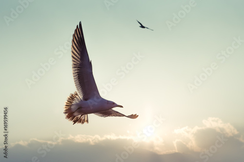 Poster Aigle gull