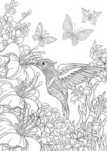 Coloring Page Of Hummingbird, ...