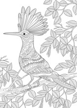 Coloring Page Of Hoopoe Bird (...