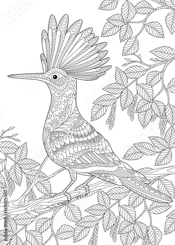 coloring page of hoopoe bird upupa epops sitting on birch tree