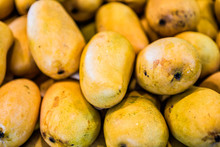 Macro Closeup Of Pile Of Many Champagne Mangoes In Farmer's Market