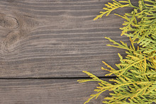 Green Thuja Branches On Wooden...