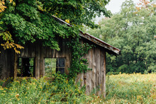 Old Overgrown Shed In Autumn
