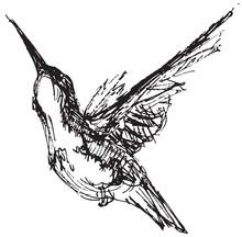 Vector Illustration Of A Hummi...