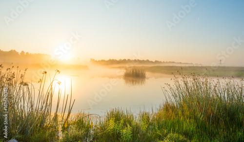Fotobehang Meer / Vijver Shore of a misty lake at sunrise in summer