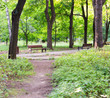 path with bench in a quiet summer park. background, nature.