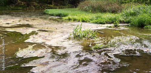 Fotografie, Tablou marshy river in the summer forest. nature, background.