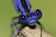 Lil'Blue Eyes