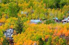 Valley Of Autumn Trees In California Sierra Mountains