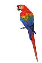 Scarlet Macaw Parrot Bird Show...