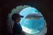 Südafrika, KwaZulu-Natal, Durban, Kleiner Junge beobachtet Tiere der Unterwasserwelt