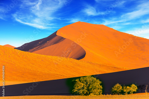 Foto  Plants and bushes in a vast desert