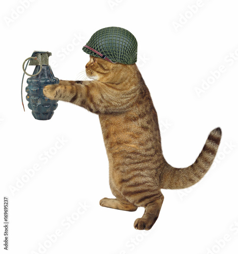 Photo  The cat soldier is holding a real grenade. White background.