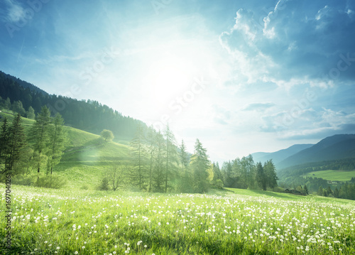Staande foto Lente field of spring dandelions in Dolomites, South Tyrol, Italy