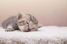 Newborn Kitten Cat Is Sleeping On White Towel