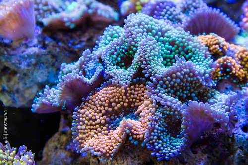 Photo Stands Coral reefs Ricordea florida Coral