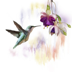 Naklejka Do sypialni Hummingbird and flowers watercolor