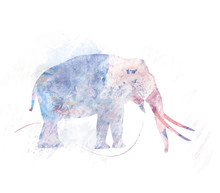 Elephant Image Watercolor