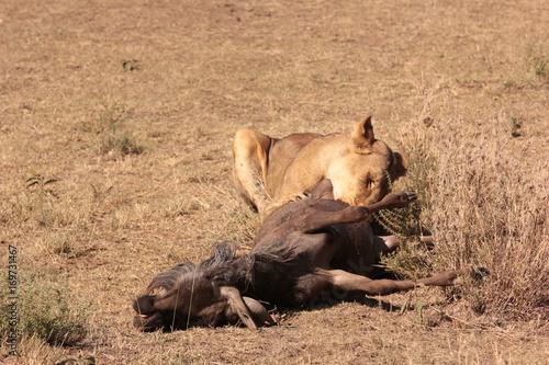 Tuinposter Eekhoorn Serengeti wildlife